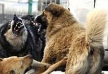Câine salvat de pompieri la Curtea de Argeş