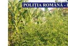 Campanie împotriva drogurilor în Argeş