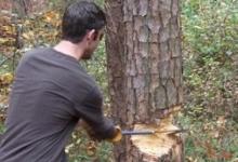Tot tacâmul: furt de arbori, abuz în serviciu, delapidare, tăinuire...