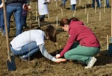 În an centenar, 100 de copaci vor fi plantaţi la Mioveni